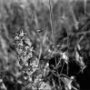 image-38-toblerone.jpg