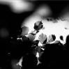 image-41-toblerone.jpg